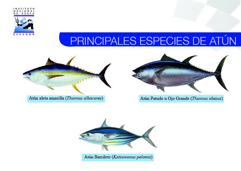 especies-de-atun