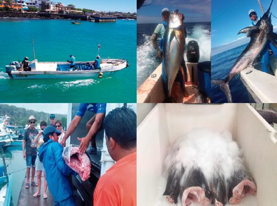 proyecto Galapagos